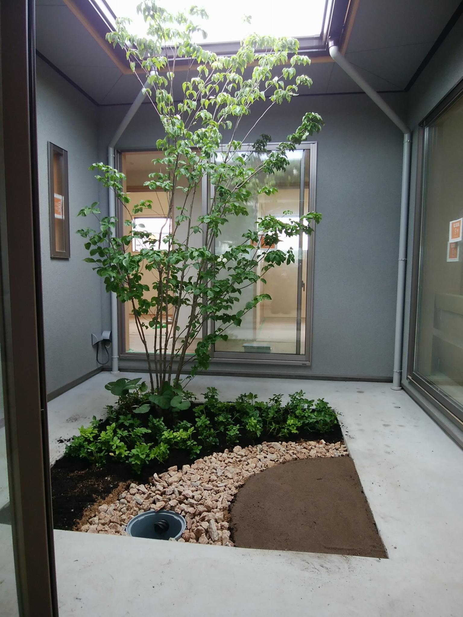総社平屋 ヤマボウシ