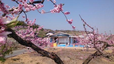桃畑の中にある平屋の注文住宅