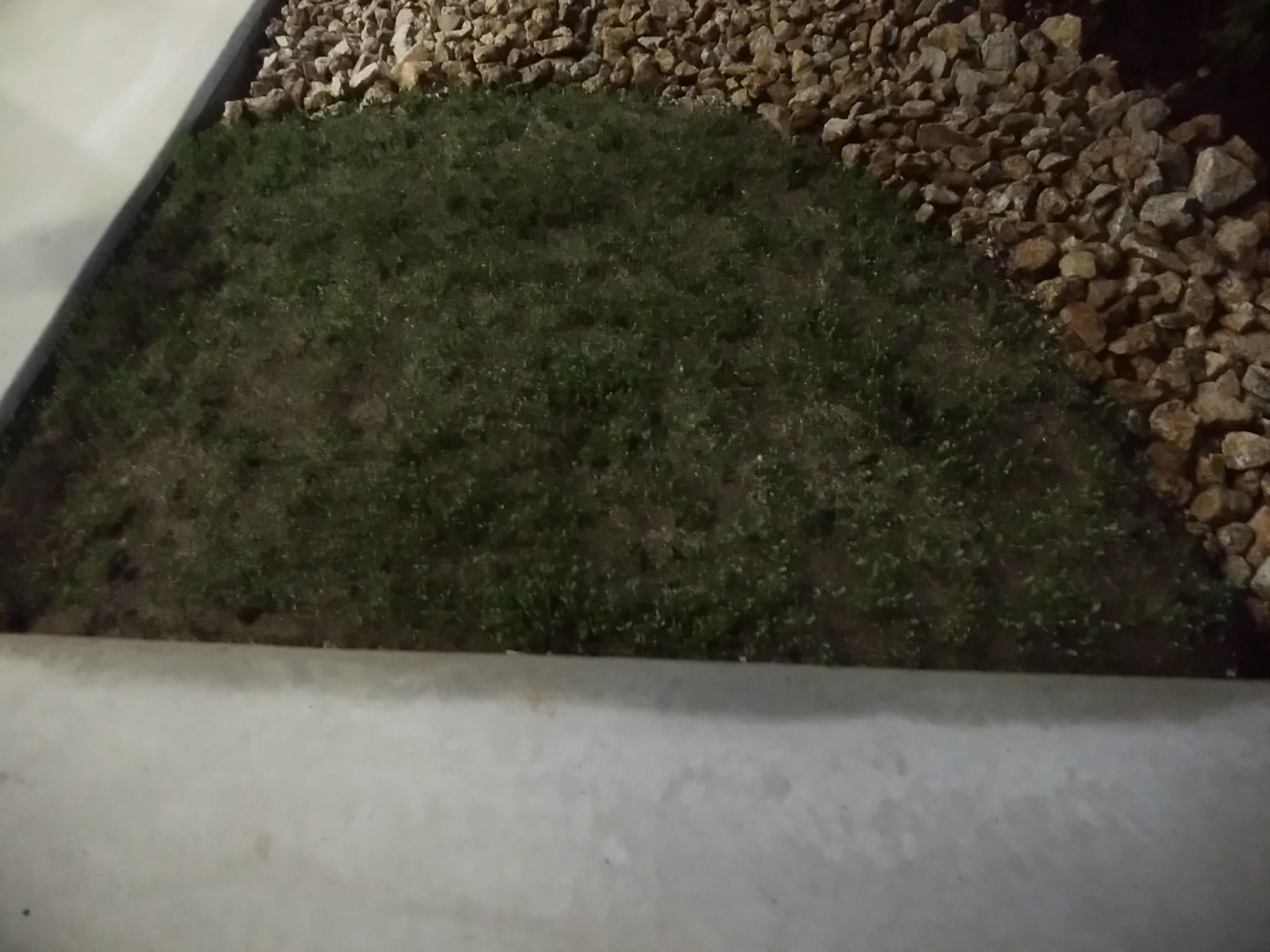 ロでつながる平屋の家 植木